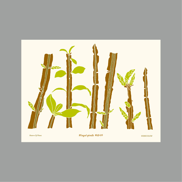 화살나무 Plants Post Card